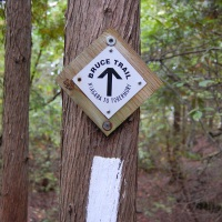 """Smoke Of The Lion's… What? Backpacking """"The Best Part"""" Of Ontario's Bruce Trail"""